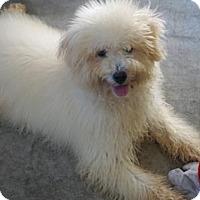 Adopt A Pet :: 'POPPY' - Agoura Hills, CA