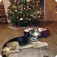 Adopt A Pet :: Lucas - Battleboro, VT