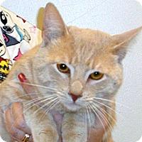 Adopt A Pet :: Pablo - Wildomar, CA