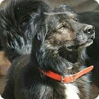 Adopt A Pet :: Stryker - Austin, TX