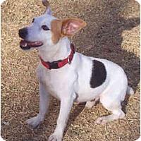 Adopt A Pet :: AJ - Phoenix, AZ