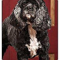 Adopt A Pet :: Gunther - Owensboro, KY