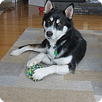 Adopt A Pet :: Ralph - Saskatoon, SK