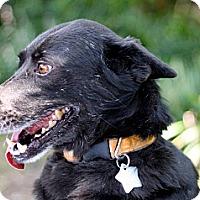 Adopt A Pet :: Nyx - Metairie, LA