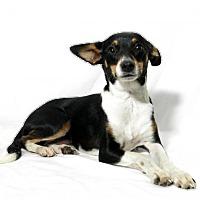 Adopt A Pet :: Roxy - Lufkin, TX