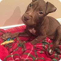 Adopt A Pet :: Kashi - Southampton, PA