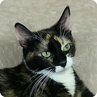 Adopt A Pet :: Valancia - Chesapeake, VA