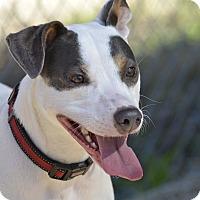 Adopt A Pet :: JellyBean - Meridian, ID