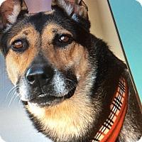 Adopt A Pet :: HEIDI VON HEILSBRONN - Los Angeles, CA