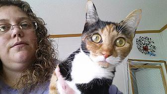 Calico Cat for adoption in Waynesville, North Carolina - Nadia