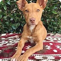 Adopt A Pet :: Rissa - 6 months old - Charleston, SC