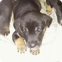 Adopt A Pet :: April - springtown, TX