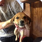 Adopt A Pet :: Baby Ravioli