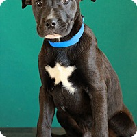 Adopt A Pet :: Joe - Waldorf, MD