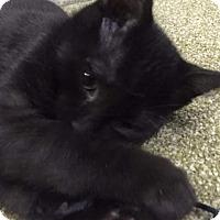 Adopt A Pet :: Jamie - Covington, KY