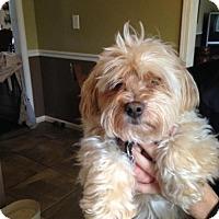 Adopt A Pet :: HANSEL - Christiana, TN