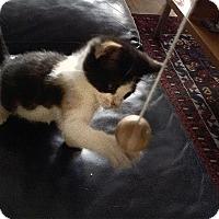 Adopt A Pet :: Echo - Chicago, IL