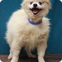 Adopt A Pet :: Toyota - Waldorf, MD
