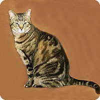 Adopt A Pet :: Abby - Hawk Point, MO