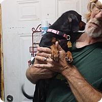 Adopt A Pet :: JASMINE - Lubbock, TX