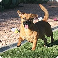 Adopt A Pet :: Maya - Henderson, NV