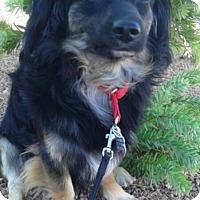 Adopt A Pet :: Buster formerly Amigo - Las Vegas, NV