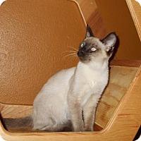 Adopt A Pet :: Ghost Face - Glendale, AZ