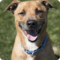 Adopt A Pet :: SIMON - Palm Springs, CA