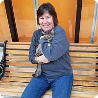 Adopt A Pet :: Stella - Elyria, OH