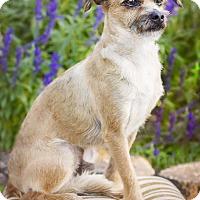 Adopt A Pet :: Benny - Terre Haute, IN