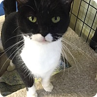 Adopt A Pet :: Vala - Holland, MI