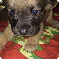 Adopt A Pet :: Penny - Boerne, TX