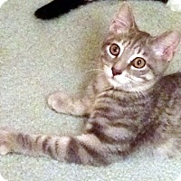 Adopt A Pet :: Houston - Lombard, IL