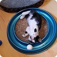 Adopt A Pet :: Tenders - Tampa, FL