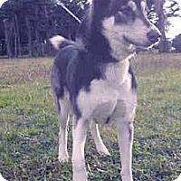 Adopt A Pet :: Kira save her life - Sacramento, CA