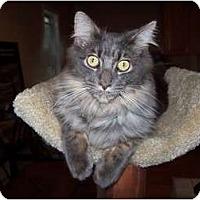 Adopt A Pet :: Cheyenne - Chester, VA