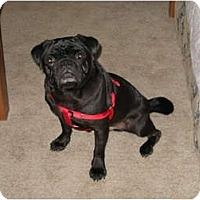 Adopt A Pet :: Charlie - Windermere, FL