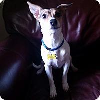 Adopt A Pet :: Jasmine - Cedar Rapids, IA
