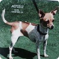 Adopt A Pet :: FIONA - Atascadero, CA