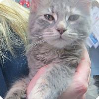Adopt A Pet :: Pandora - Brockton, MA
