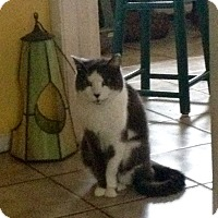 Adopt A Pet :: Dusty (Oreo) - New Port Richey, FL
