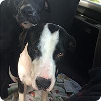 Adopt A Pet :: Topeka - Daleville, AL