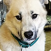 Adopt A Pet :: Dr. Gonzo - Durham, NC