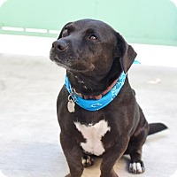 Adopt A Pet :: Ana - Los Angeles, CA
