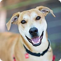 Adopt A Pet :: Cleveland - Houston, TX