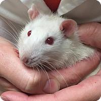 Adopt A Pet :: Remy - Grand Rapids, MI