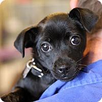 Adopt A Pet :: Josephine - Pacific Grove, CA