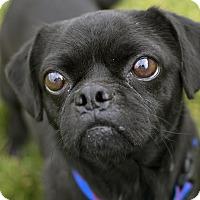 Adopt A Pet :: Rupert - Fremont, NE