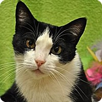 Adopt A Pet :: Maggie - Foothill Ranch, CA