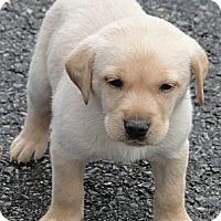 Adopt A Pet :: Christian - Columbus, IN